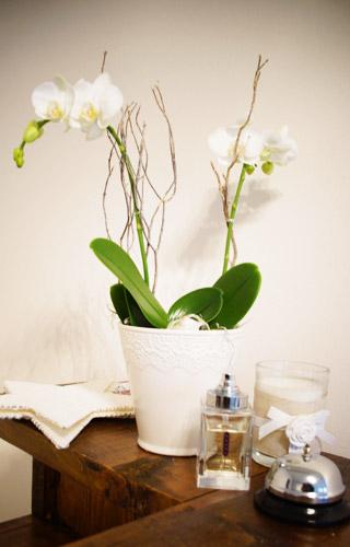 Der Massör - Praxis Breitenrain, Flowers